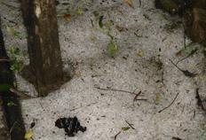 Granizo também foi registrado em Morro Redondo, no sul do Estado-Airton Ewald, De olho no tempo